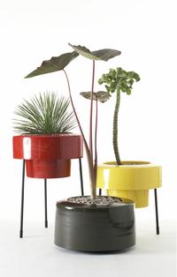 Modern Charlotte - planter