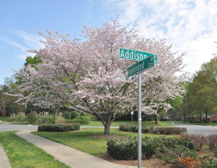 Spring in Sherwood Forest – A True Mid-Century Neighborhood
