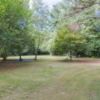 1311 Greylyn Dr mid-century modern charlotte home back yard